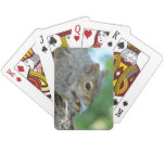 Squirrel Hanging in A Tree Playing Cards