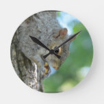Squirrel Hanging in A Tree Round Clock