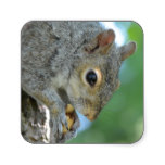 Squirrel Hanging in A Tree Square Sticker