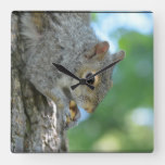 Squirrel Hanging in A Tree Square Wall Clock