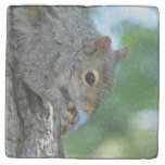 Squirrel Hanging in A Tree Stone Coaster