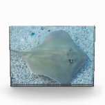 Stingray Underwater Acrylic Award