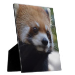 Sweet Red Panda Bear Plaque