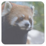 Sweet Red Panda Bear Square Paper Coaster