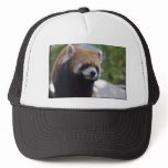 Sweet Red Panda Bear Trucker Hat