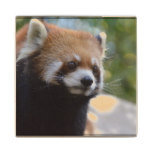 Sweet Red Panda Bear Wood Coaster