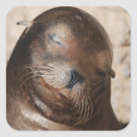 Sweet Sea Lion Stickers