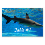 Swimming Shark Card