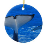Tail of a Whale  Ornament