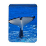 Tail of a Whale Premium Magnet