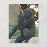 Thoughtful Gorilla Postcard