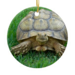 Tortoise Ornaments