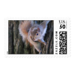 Tree Squirrel  Postage Stamp