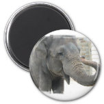 Trumpeting Elephant Round Button Magnet