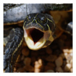 Turtle with Mouth Open Poster