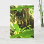 Wild Coati Greeting Card