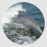 Wild Dolphin Stickers