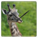 Wild Giraffe Square Wall Clock