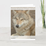 Wolf Greeting Card
