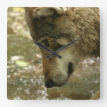 Wolf Pawing Water Square Wall Clock