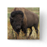 Wood Bison Square Pin