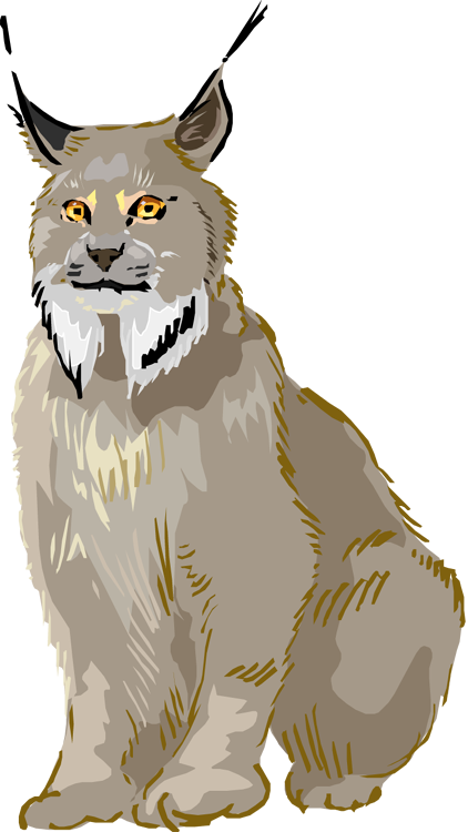 Free Lynx Clipart