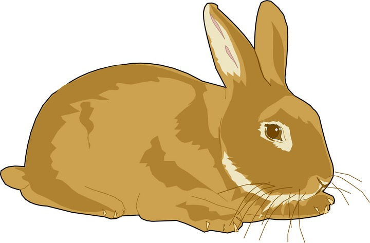 clipart rabbit cartoon - photo #23