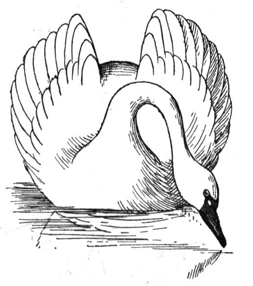 free swan coloring pages - photo#23